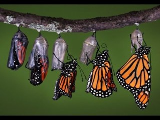 Butterfly to Caterpillar
